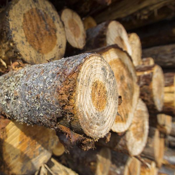 Premium firewood tout